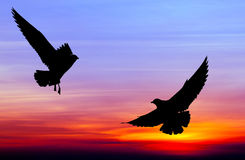 Silhouetted two seagull flying at sunset Royalty Free Stock Photos