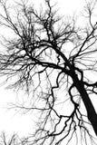 Silhouetteer een boom stock afbeelding