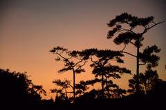 Silhouetteer voordien de bomenachtergrond stock afbeeldingen
