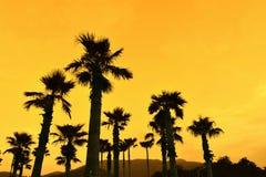 Silhouetteert plam bomen met oranje zonsondergang Stock Fotografie