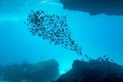 Silhouettein d'école de poissons une caverne de mer Images libres de droits