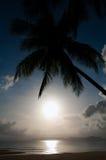 Silhouettekokosnöten gömma i handflatan och havet Fotografering för Bildbyråer