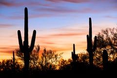 Silhouetten在沙漠 免版税库存图片