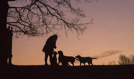 Silhouetten Stock Foto