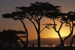 Silhouetten bij Zonsondergang stock foto