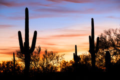 Silhouetten in Desert. Saguaro silhouetten against red sky Royalty Free Stock Image