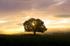 Silhouetten grote bomen in de weide Stock Afbeelding