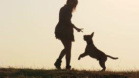 Silhouetten van aanbiddelijk meisje die een hond opleiden en het voeden op de aard stock video