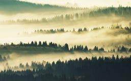 Silhouetten van bergen Een nevelige de herfstochtend Dawn in de Karpaten Stock Foto's