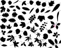 Silhouetten van bladeren Stock Afbeelding