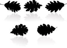 Silhouetten van bladeren Stock Fotografie