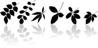 Silhouetten van bladeren Stock Foto's
