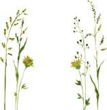 Silhouetten van bloemen en gras Stock Afbeelding