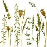 Silhouetten van bloemen en gras Royalty-vrije Stock Foto