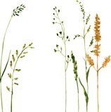 Silhouetten van bloemen en gras Stock Foto