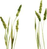 Silhouetten van bloemen en gras Stock Afbeeldingen