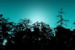 Silhouetten van bomen royalty-vrije stock afbeeldingen