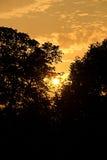 Silhouetten van bomen Royalty-vrije Stock Foto's