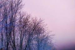 Silhouetten van bomen tegen een kleurrijke avondhemel stock foto