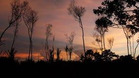 Silhouetten van bomen royalty-vrije stock afbeelding