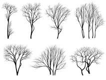 Silhouetten van bomen zonder bladeren. Stock Afbeeldingen