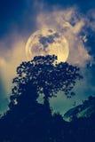 Silhouetten van boom tegen donkere hemel op rustige aardbackgrou Stock Foto