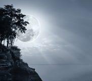 Silhouetten van boom tegen hemel over rustige overzees Stock Fotografie