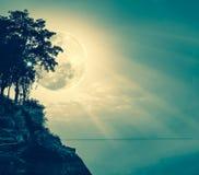 Silhouetten van boom tegen hemel over rustige overzees Stock Foto