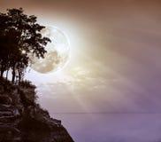 Silhouetten van boom tegen hemel over rustige overzees Stock Afbeeldingen