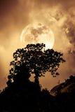 Silhouetten van boom tegen hemel over rustige overzees Aard Backgr Royalty-vrije Stock Afbeelding