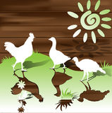 Silhouetten van de kippen Stock Afbeelding