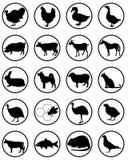 Silhouetten van dieren Stock Foto's