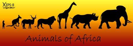 Silhouetten van dieren van Afrika: meerkat, kangoeroe, kuduantilope, leeuw, giraf, rinoceros, olifant Stock Foto