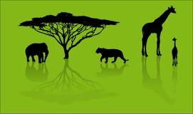 Silhouetten van dieren van safari Stock Foto