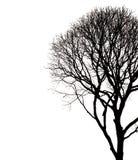 Silhouetten van dode die boomtak op wit wordt geïsoleerd Gespaard met cl stock afbeelding