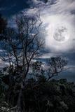 Silhouetten van droge boom tegen hemel en mooie volle maan uit Royalty-vrije Stock Foto's