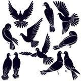 Silhouetten van duiven die vliegen en zitten Royalty-vrije Stock Foto