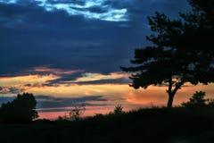 Silhouetten van een boom op een zonsondergangachtergrond Royalty-vrije Stock Foto's