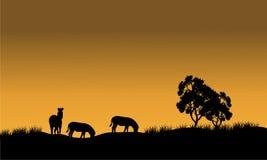 Silhouetten van een zebra en een boom tegen Royalty-vrije Stock Afbeelding