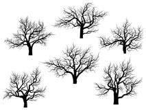 Silhouetten van eiken bomen zonder bladeren. Stock Foto
