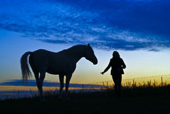 Silhouetten van het paard en de vrouw op een achtergrond van blauwe hemel in de avond Stock Foto