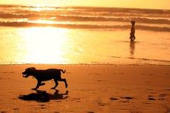 Silhouetten van het runnen van hond en een mens op het strand Stock Foto
