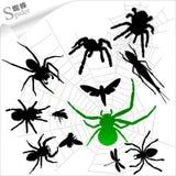 Silhouetten van insecten - Spinnen Stock Foto