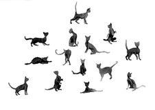 Silhouetten van kattenwanercolor stock afbeeldingen