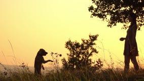 Silhouetten van meisje die een bal werpen Het spelen van het meisje met hond stock videobeelden