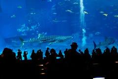 Silhouetten van mensen in aquarium stock foto's