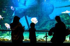 Silhouetten van mensen in Oceanarium stock afbeelding