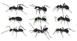 Silhouetten van mieren stock illustratie