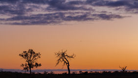 Silhouetten van naakte bomen, oranje zonsondergang, Australië Royalty-vrije Stock Foto