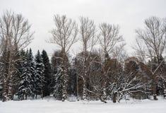 Silhouetten van naakte en snow-covered bomen tegen een witte hemel a Stock Foto